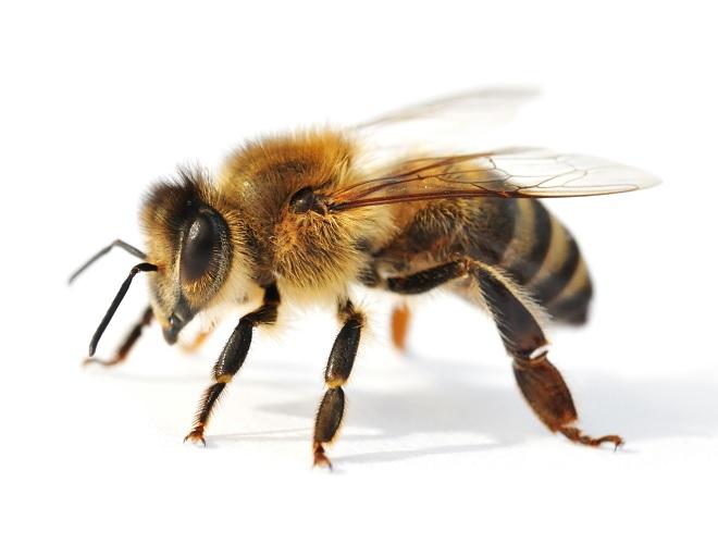 Super Bienen und Wespen - Katastrophenschutz und Feuerwehr der Stadt Graz EI67